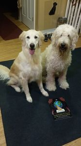 coloring book goldendoodle